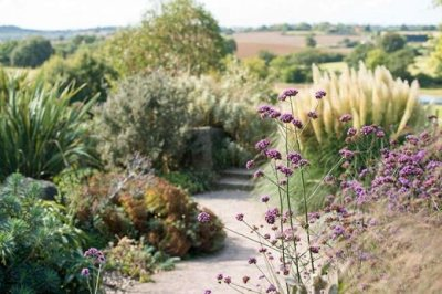 The-Dry-Garden-(with-Verbena-bonariensis-in-the-foreground)-in-late-summer-at-RHS-Hyde-Hall-_MAR0010395_106522