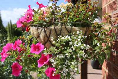 Hanging Basket, by front door