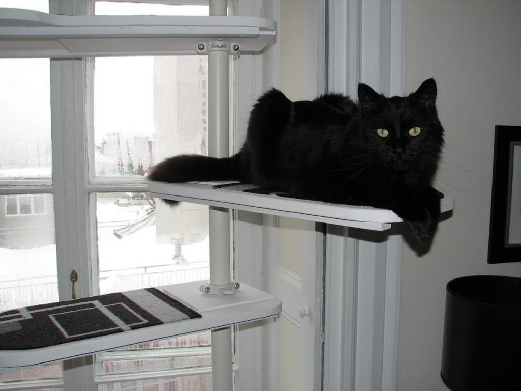 Un Arbre Chat Noir Et Blanc Avec STOLMEN