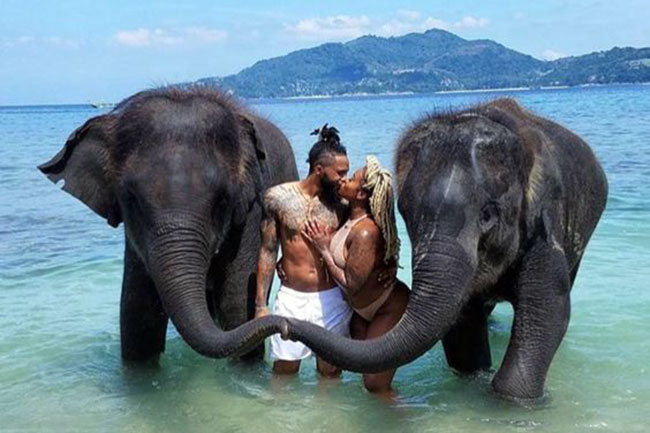 Elephants also suffers from broken heart just like humans.