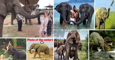 9 amazing facts about Elephants you didn't know (See photos inside)