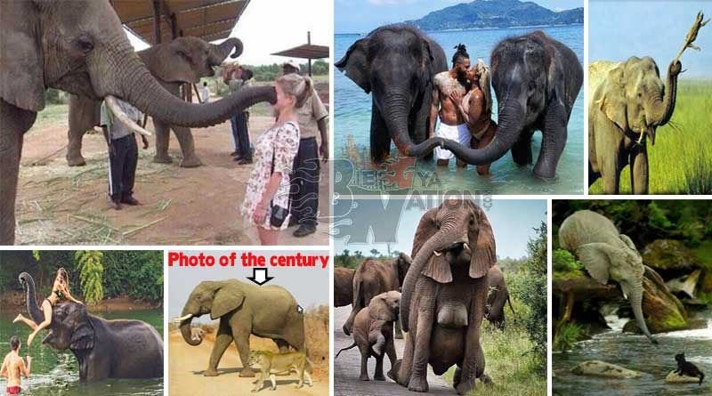 Elephant facts you did not know.
