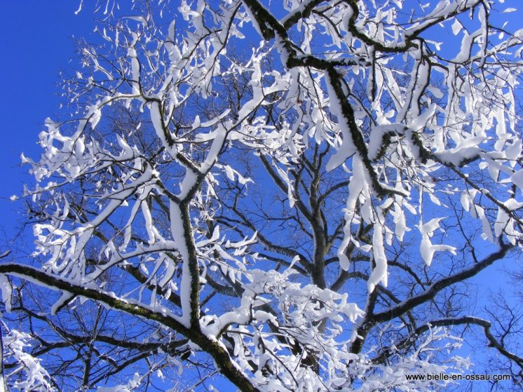 hiver 2010 042