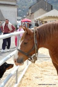 foire-bielle-2010 (13)