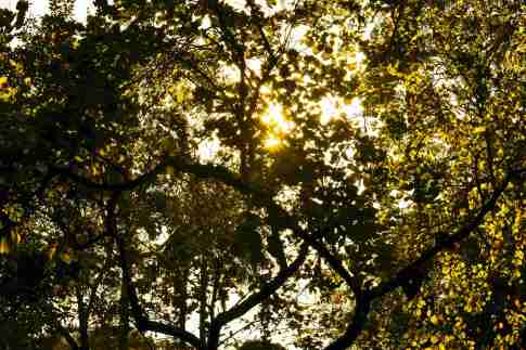 sunshine through green leafed tree 188015 compressed