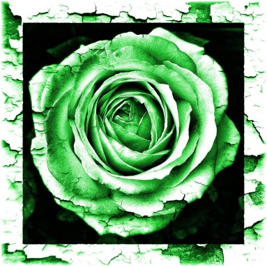 Rose gruen