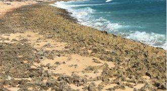 Playa en Venta en Uvero Alto