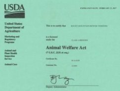 USDA License Rocky Mountain Biewer Terriers