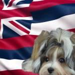No Puppy to Hawaii