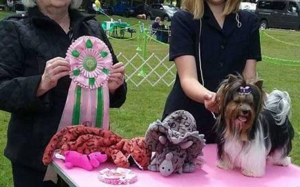Rocky Mountain's Sir Casper wins Best in Show