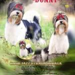 Donny - Irish Jazz Dzhaga-Dzhaga