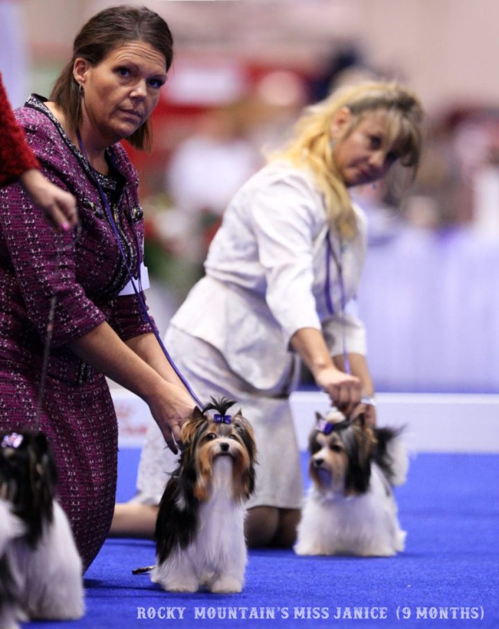 Rocky Mountain's Miss Janice & Miss Lola Biewer Terrier AKC Orlando