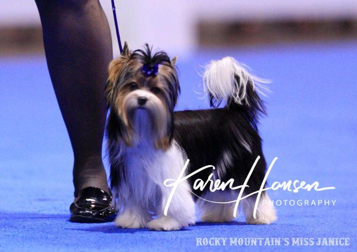Rocky Mountain's Miss Janice in Show