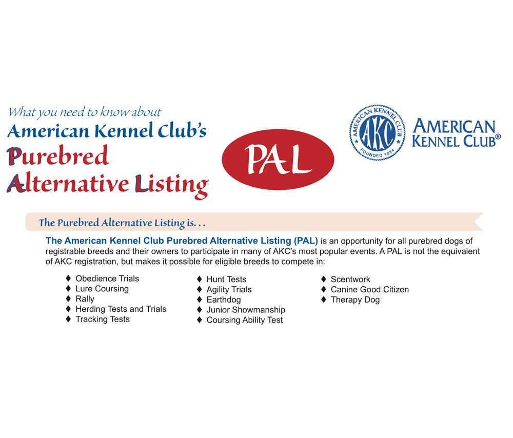 Show Your Biewer Terrier with the American Kennel Club PAL