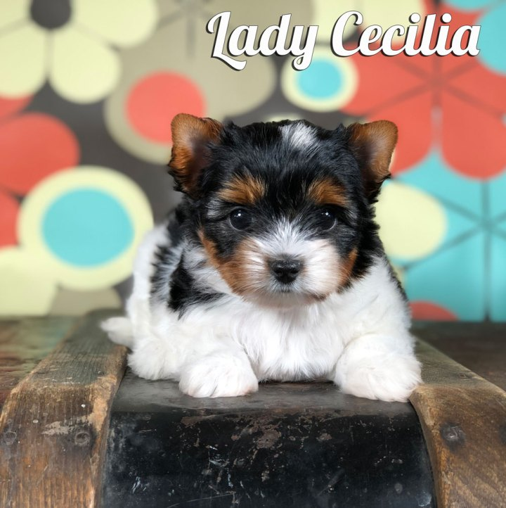 Cecilia Biewer Puppy