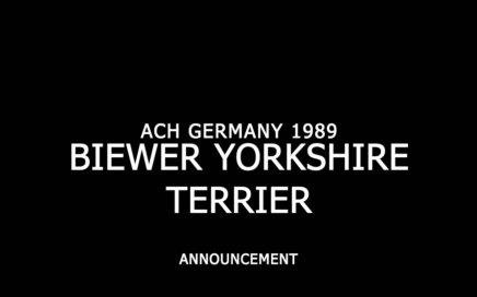 Biewer Yorkshire Terrier Announcement