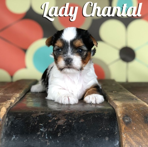 Chantal Biewer Puppy