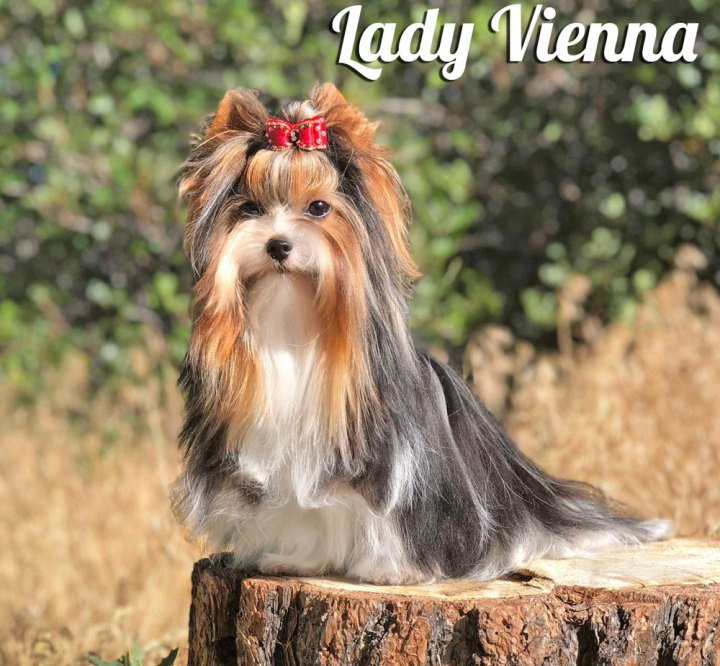 Rocky Mountain's Lady Vienna