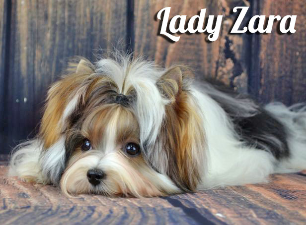 Rocky Mountain's Lady Zara