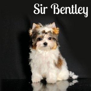 Russin Salon Dog Puppy