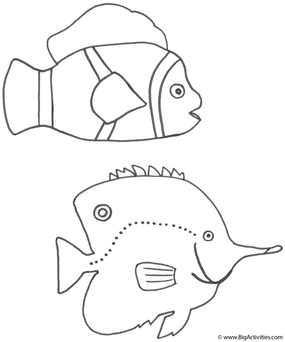 clown fish and discus fish coloring page fish