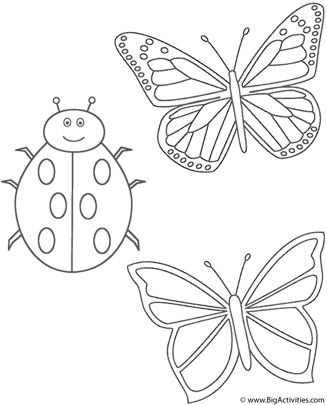 Two Butterflies And Ladybug