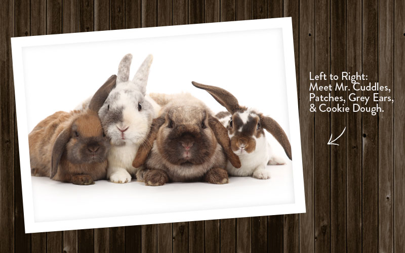 Meet our new bunnies for our Chicks and Bunnies sessions