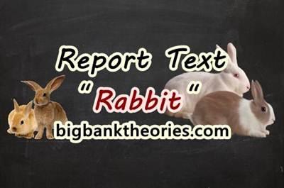 Report Text Bahasa Inggris Tentang Kelinci