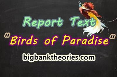 Report Text Bahasa Inggris Tentang Burung Cenderawasih
