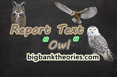 Report Text Bahasa Inggris Tentang Burung Hantu