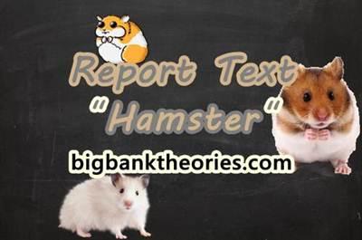 Report Text Bahasa Inggris Tentang Hamster