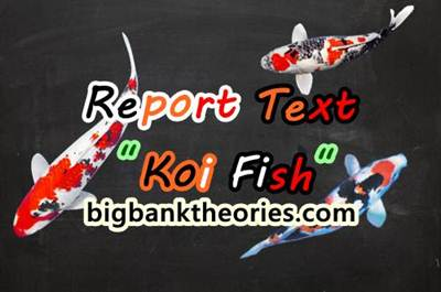 Report Text Bahasa Inggris Tentang Ikan Koi