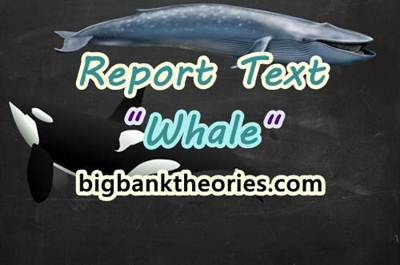 Report Text Bahasa Inggris Tentang Ikan Paus