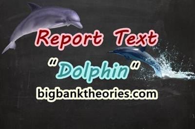 Report Text Bahasa Inggris Tentang Lumba Lumba