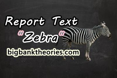 Report Text Bahasa Inggris Tentang Zebra
