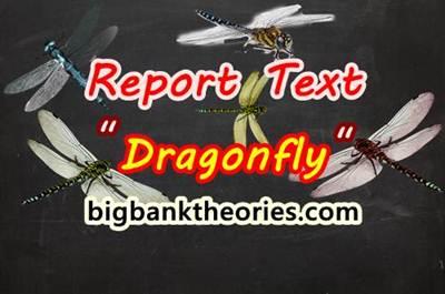 Report Text Bahasa Inggris Tentang Capung