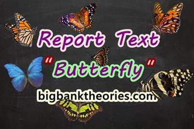 Contoh Report Text Singkat Tentang Kupu Kupu Dan Artinya