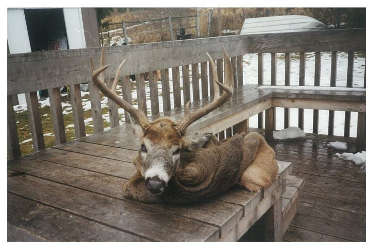 The Old Hunting Chair 2 - bigbearoutfitters.co