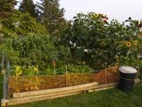 picture of organic vegetable garden image