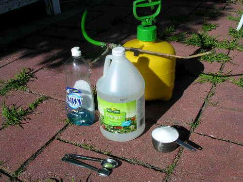 White Vinegar As Organic Weed Killer ⋆ Big Blog Of Gardening