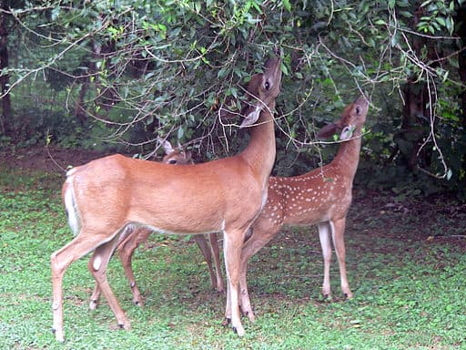 Deer and Rabbits Won't Eat These Flowers, Shrubs, Herbs, and