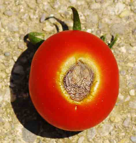 Fertilizer: How Much Does Your Vegetable Garden Need? ⋆ Big