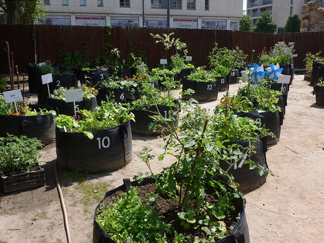 6 Tips for Growing Gardens In Urban Landscapes ⋆ Big Blog Of Gardening