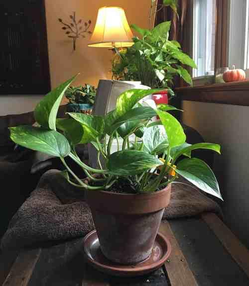 Tips For Indoor Gardening: 4 Tips For Winter Gardening Indoors ⋆ Big Blog Of Gardening