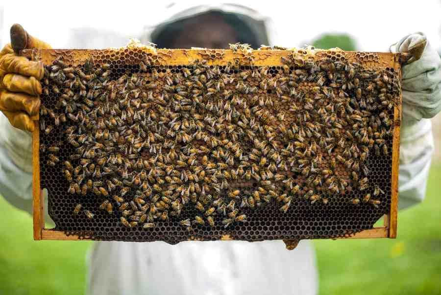 urban beekeeping, urban beehive