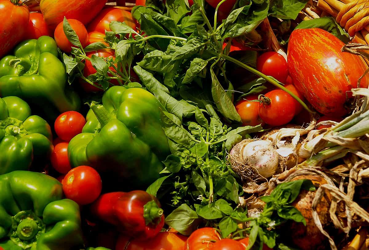 cosechando el huerto orgánico