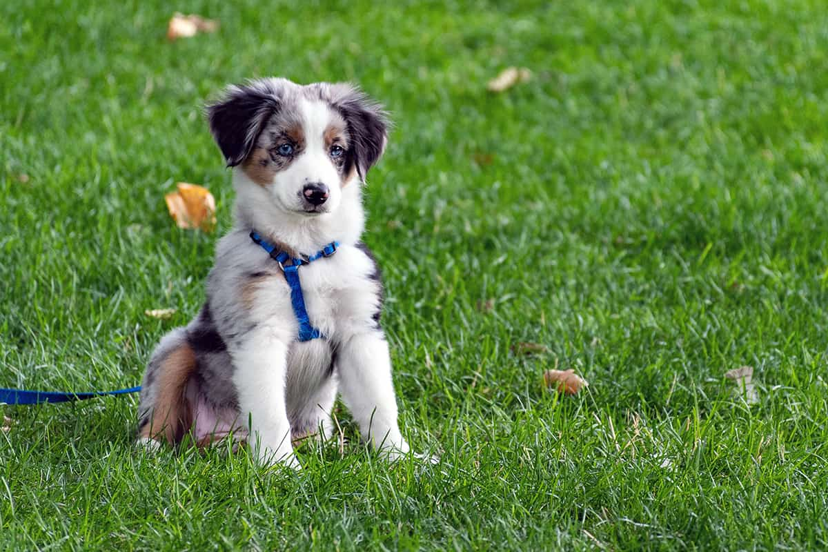 Cachorro orgánico en la hierba