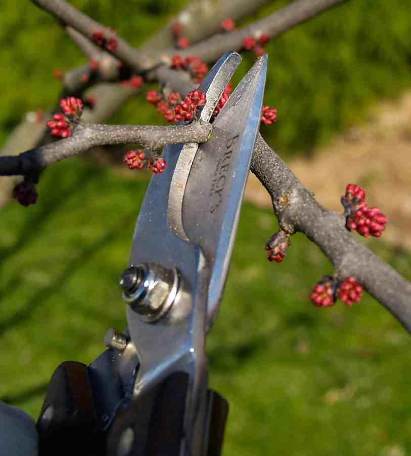 pruning a twig