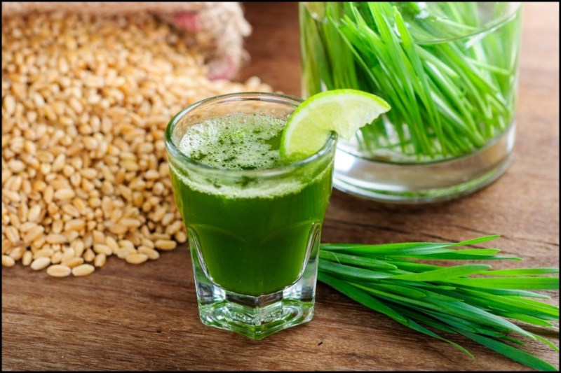 wheatgrass benefits and side effects