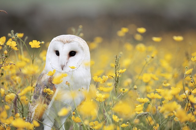 White Owl Dream Meaning